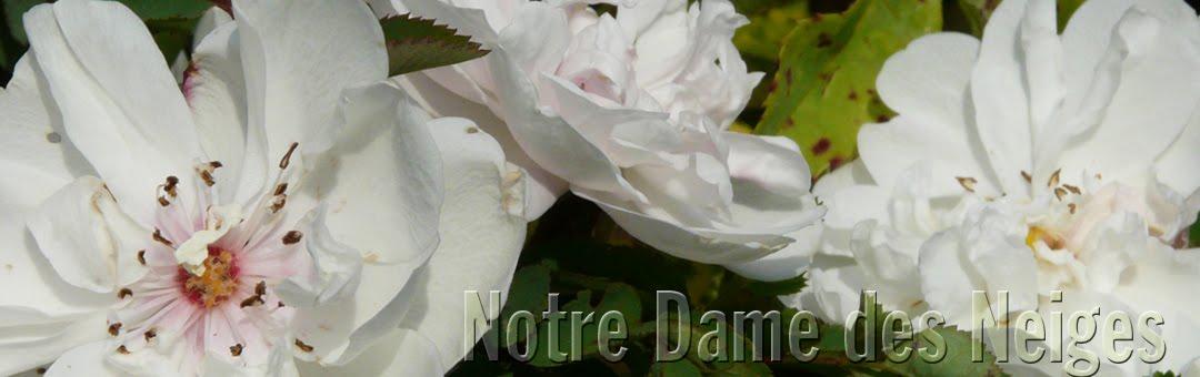 Notre Dame des Neiges de Susville