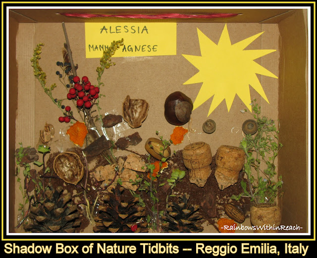 photo of: Reggio Emilia, Italy: Shadow Box of Nature Elements