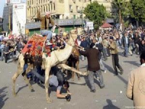 جزء من دور الاخوان في ثورة 25 يناير