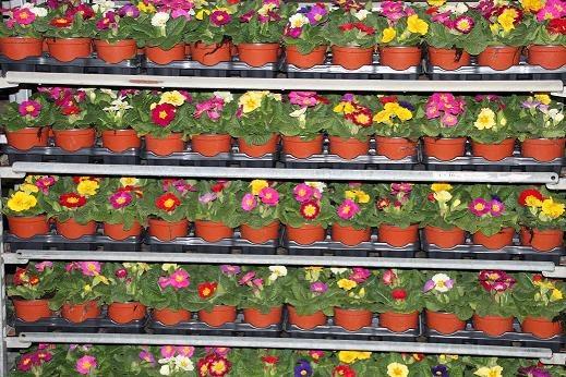 flores germigarden