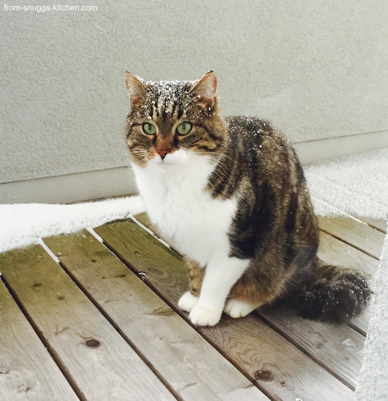 Katze mit Schnee