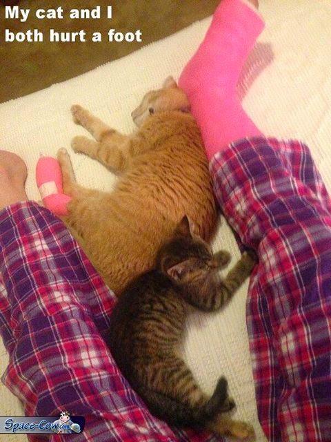 funny cat leg picture