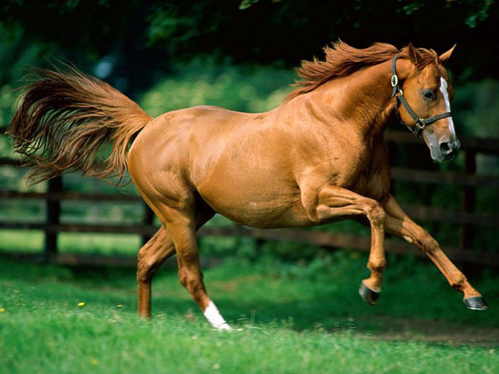 Fantastic   Wallpaper Horse Green - love+horse-wallpapers  2018_5731.jpg