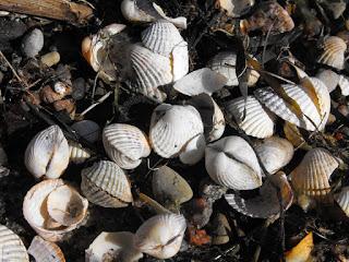 Muszelki na plaży