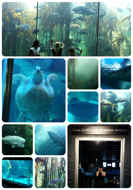 two oceans aquarium part 2