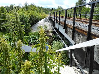 Заросли крапивы у моста