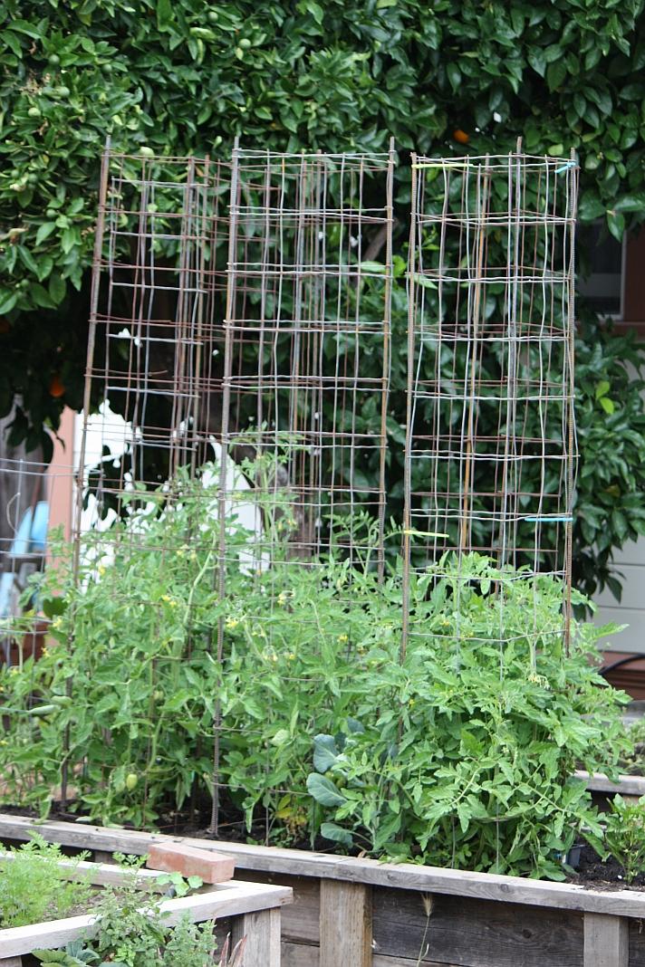 frugal frolic diy frugal tomato cages. Black Bedroom Furniture Sets. Home Design Ideas