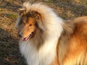 Pincha sobre foto y verás el pedigree.DO RIPAUMIA FONTE FORNECIDA