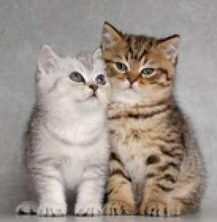 Gambar kucing lucu banget