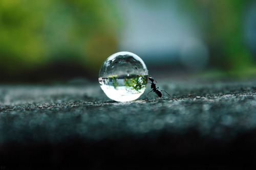 water drop and ant wallpaper