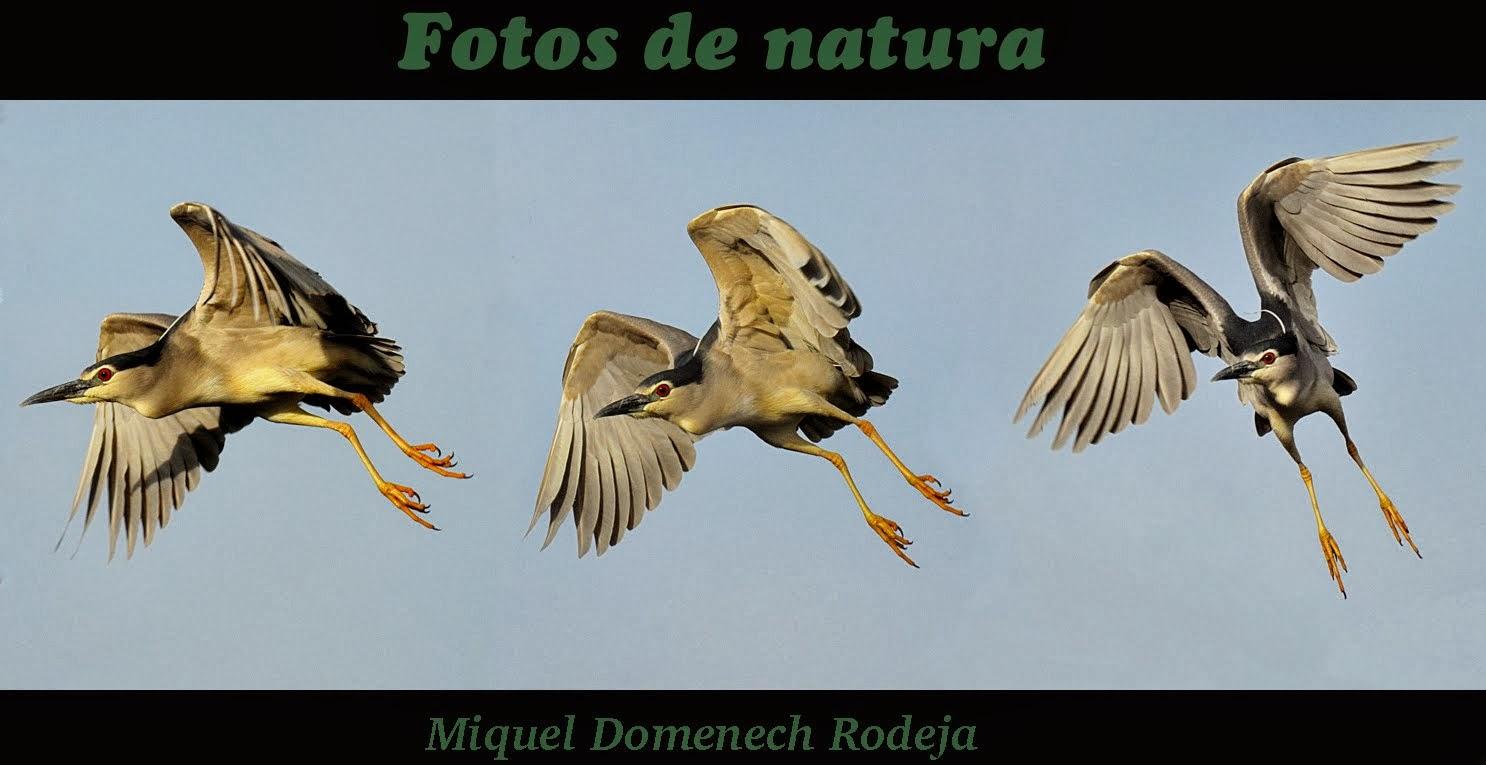 FOTOS DE NATURA    Miquel Domenech I Rodeja