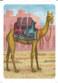 camel from Jaipur card game
