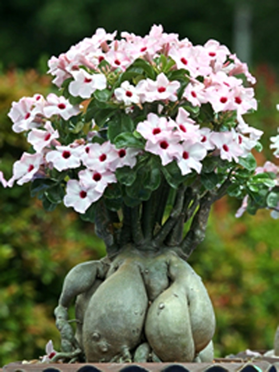 decora interi plantas ex ticas