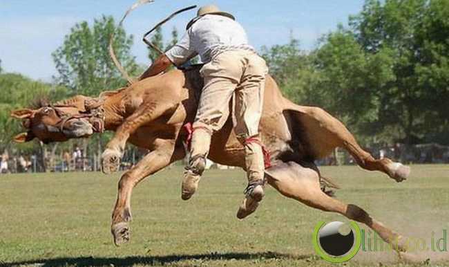 Kuda Menggila