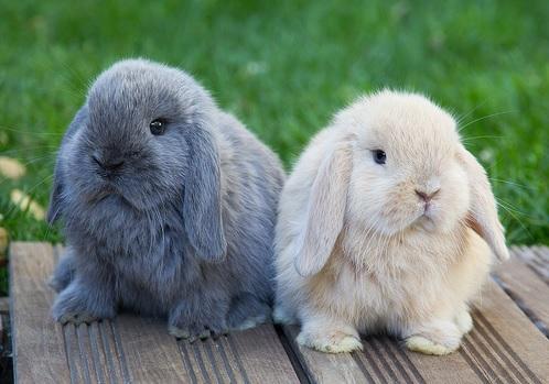 Cone orejones noviembre 2015 - Casas para conejos enanos ...