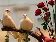 Que significa soñar con paloma blanca