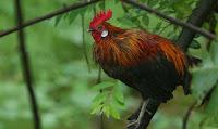 7 Hewan yang dapat Memberikan Tanda Kedatangan Makhluk Halus
