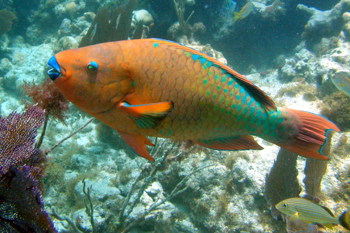 parrot fish Parrotfish by ellen wittlinger - last week i cut my hair, bought some boys' clothes  and shoes, wrapped a large ace bandage around my chest to flatten my.