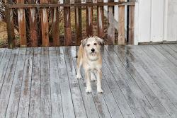 Dette er vår kjære Laika