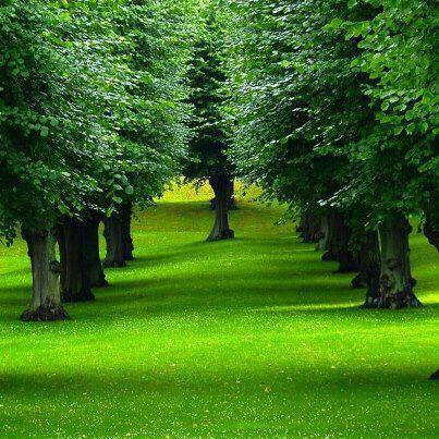 Nos caminhos do bem despertar para nova consci ncia for Costo alberi da giardino