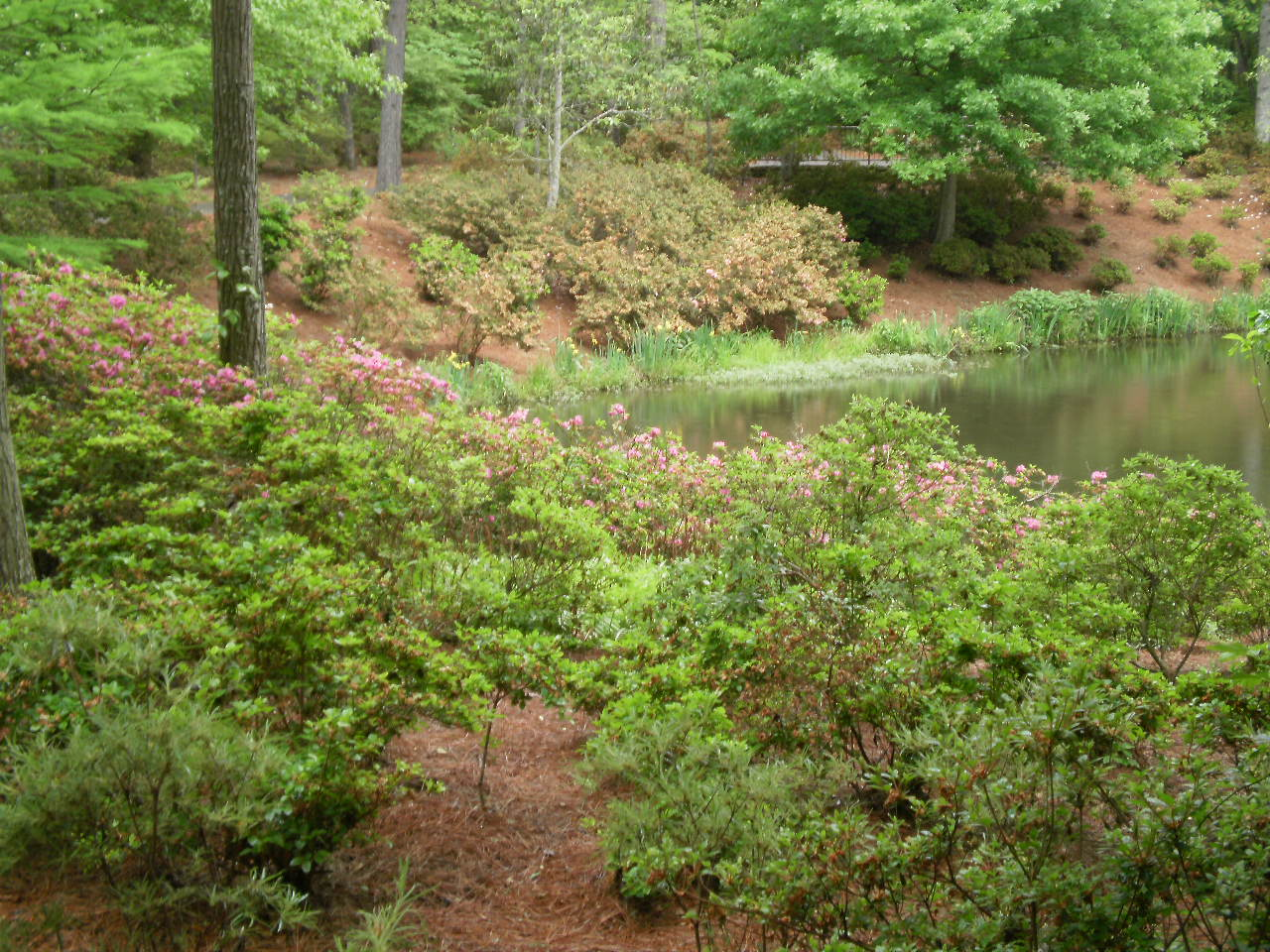 Ramblertrek callaway gardens pine mountain georgia - Callaway gardens pine mountain georgia ...