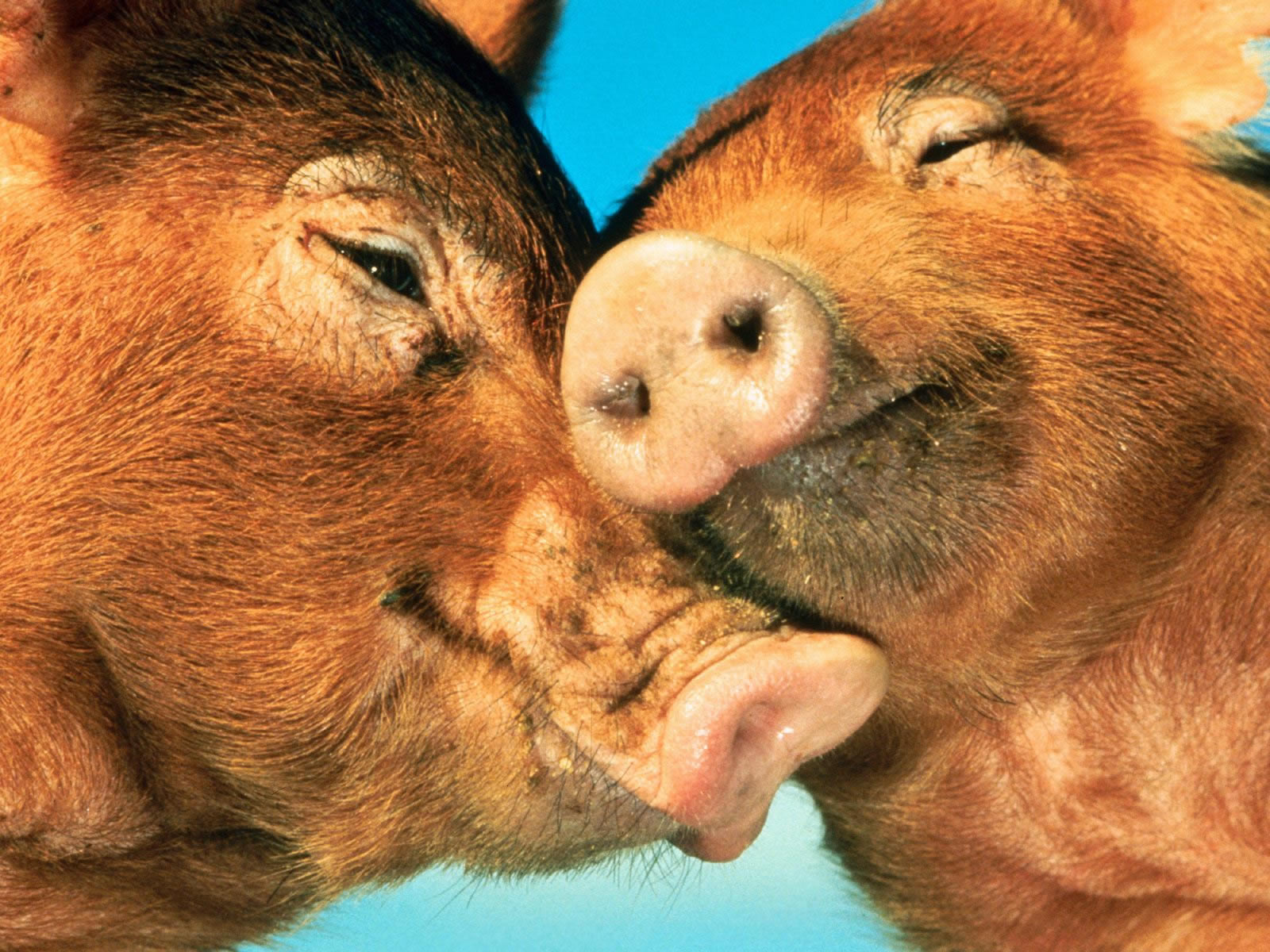 love animals Loving animals may have been passed down genetically from ancestors who appreciated their services.