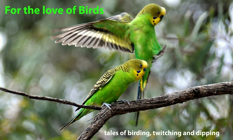 For the Love of Birds
