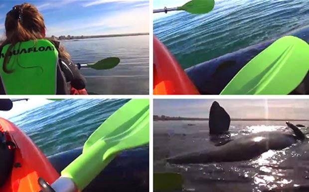 A baleia veio na direção deles e os elevou da água duas vezes em sua cabeça