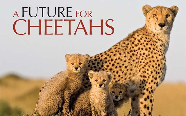 Cheetah Conservation Fund-Just One Click