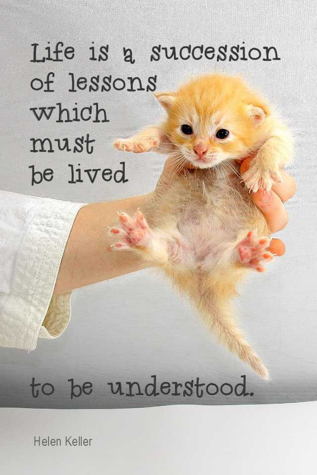 visual quote - image quotation for LIFE - Life is a succession of lessons which must be lived to be understood. - Helen Keller