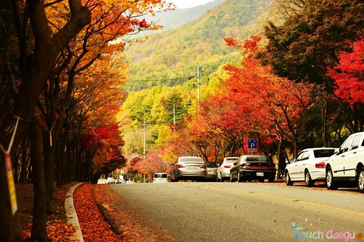 The scenery of the road with fall foliage near Mt. Palgong