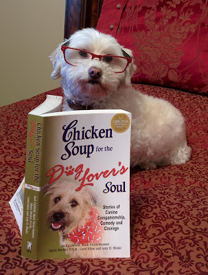 Adorable dogs reading!