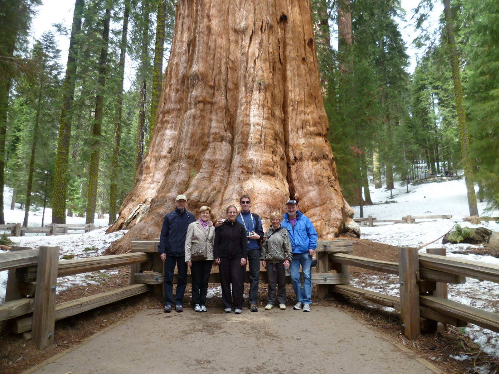 sequoia national park single parents 2-day yosemite, kings canyon and sequoia nation park tour from san francisco tour code: 552-6273.