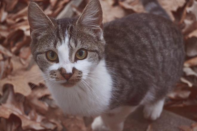 The Flying Clubhouse: feline friend