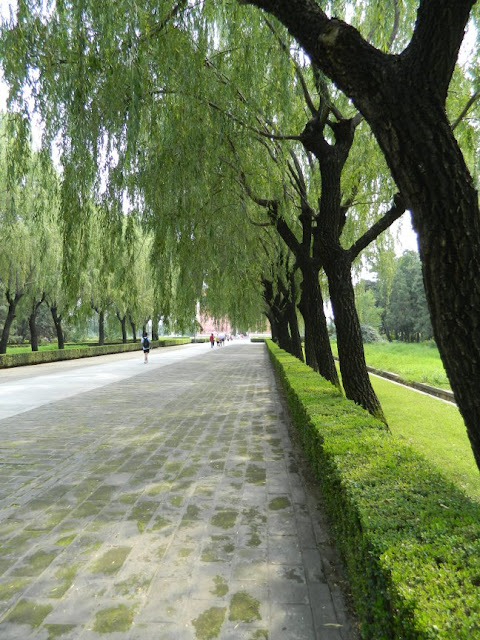 Sacred Way path near Ming Tombs showing hedges and willows by garden muses: a Toronto gardening blog