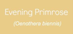 Evening Primrose Carrier Oil