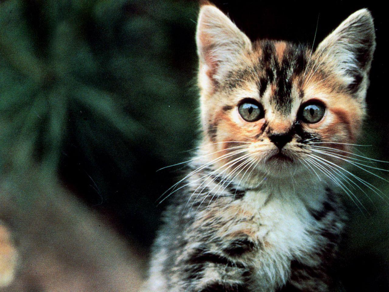 El blog de los gatitos: Mamá con muchos colores (N° 342)