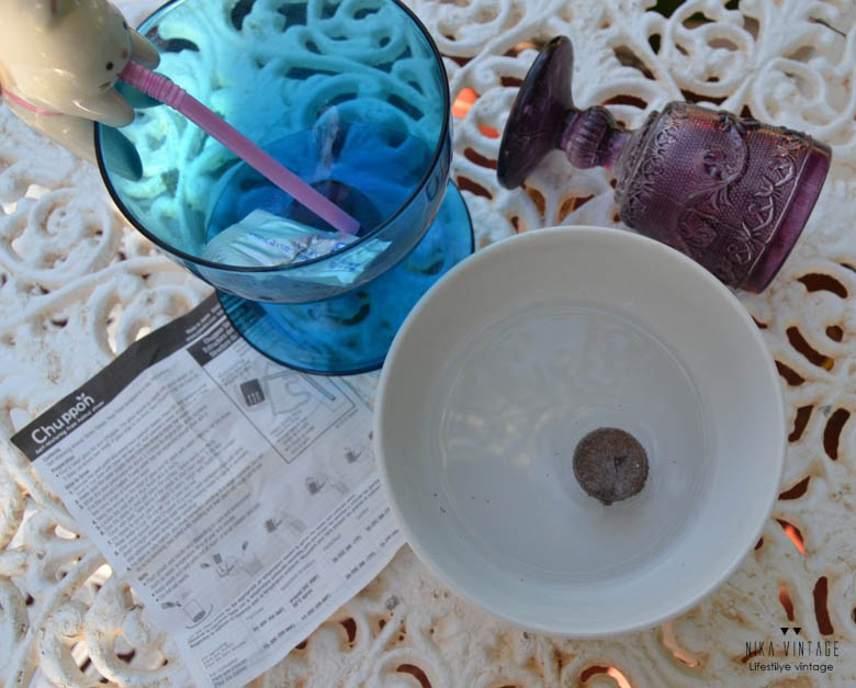 chuppon, semilla, semillas, plata, plantel, fresas, hoy compartimos