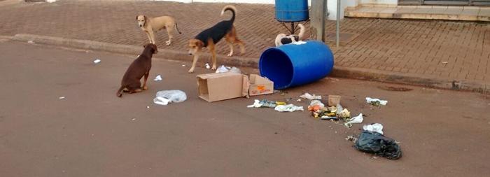 Roncador: Saúde se reúne para o controle populacional de cães