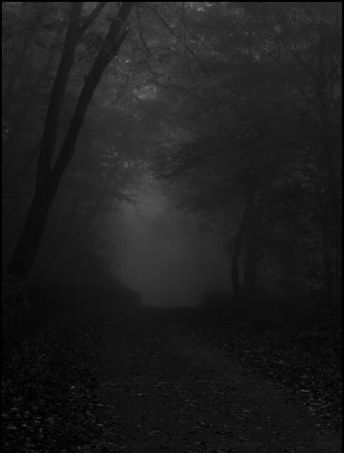 Durch den düsteren Nebelwald