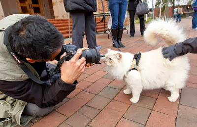 Foto Teddy si kucing terapi di Pacific Lutheran University 01
