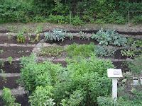 The garden in summer time