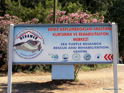 Turtle Rescue Centre In Dalyan