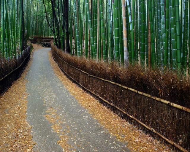Fotos de linda floresta  bambu