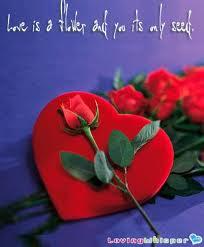 valentine-day-flowe