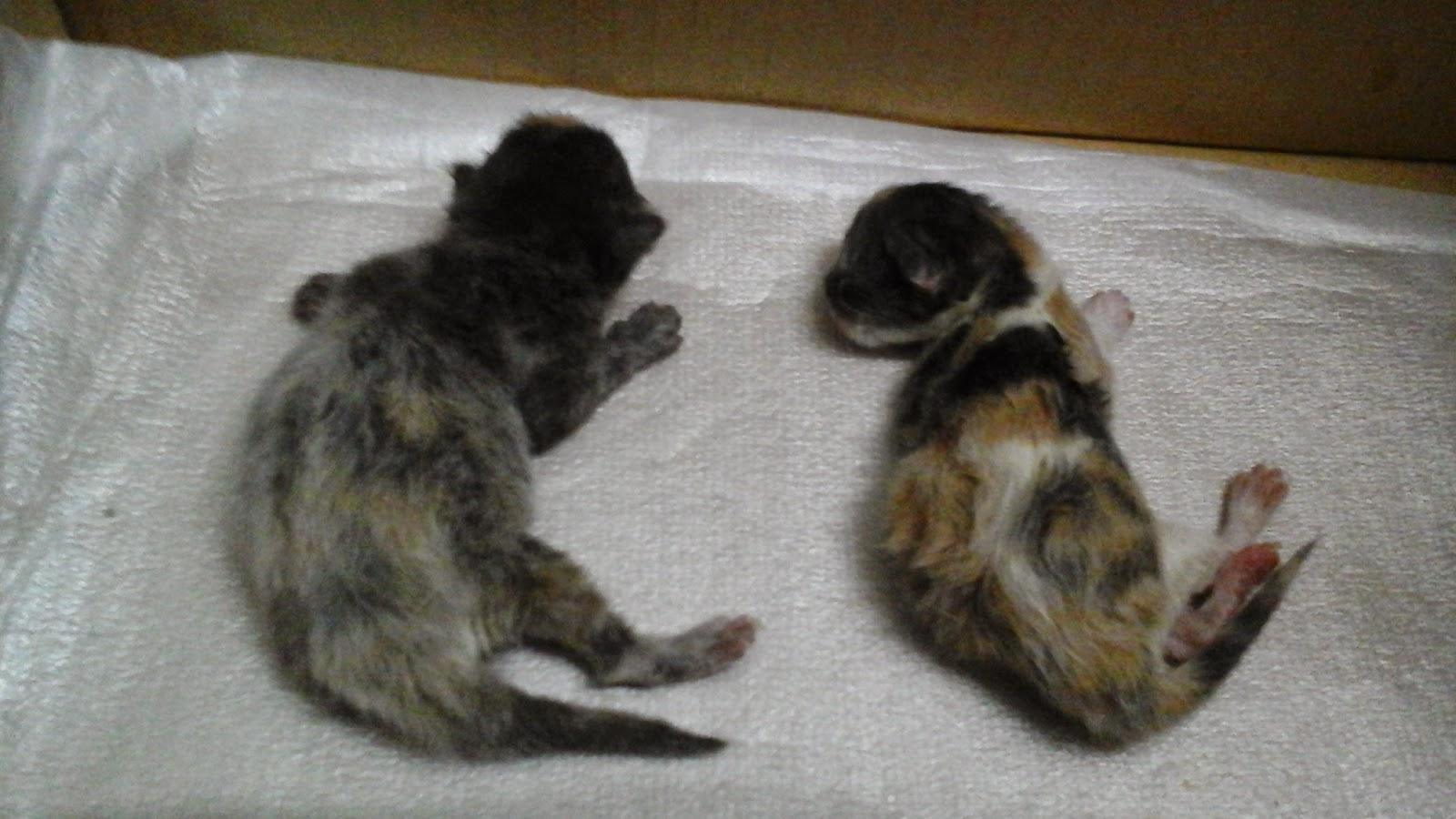 anak kucing baru lahir