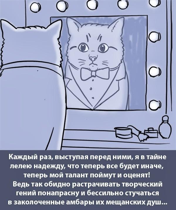 Как себя видит кот