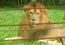 Passeio Zoológico de Pomerode