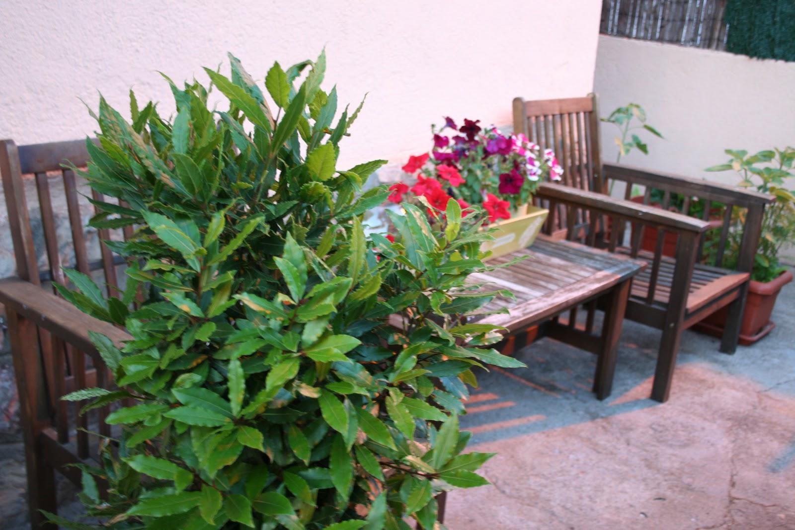 Milanesa mi jard n de aromaticas - Jardin de aromaticas ...