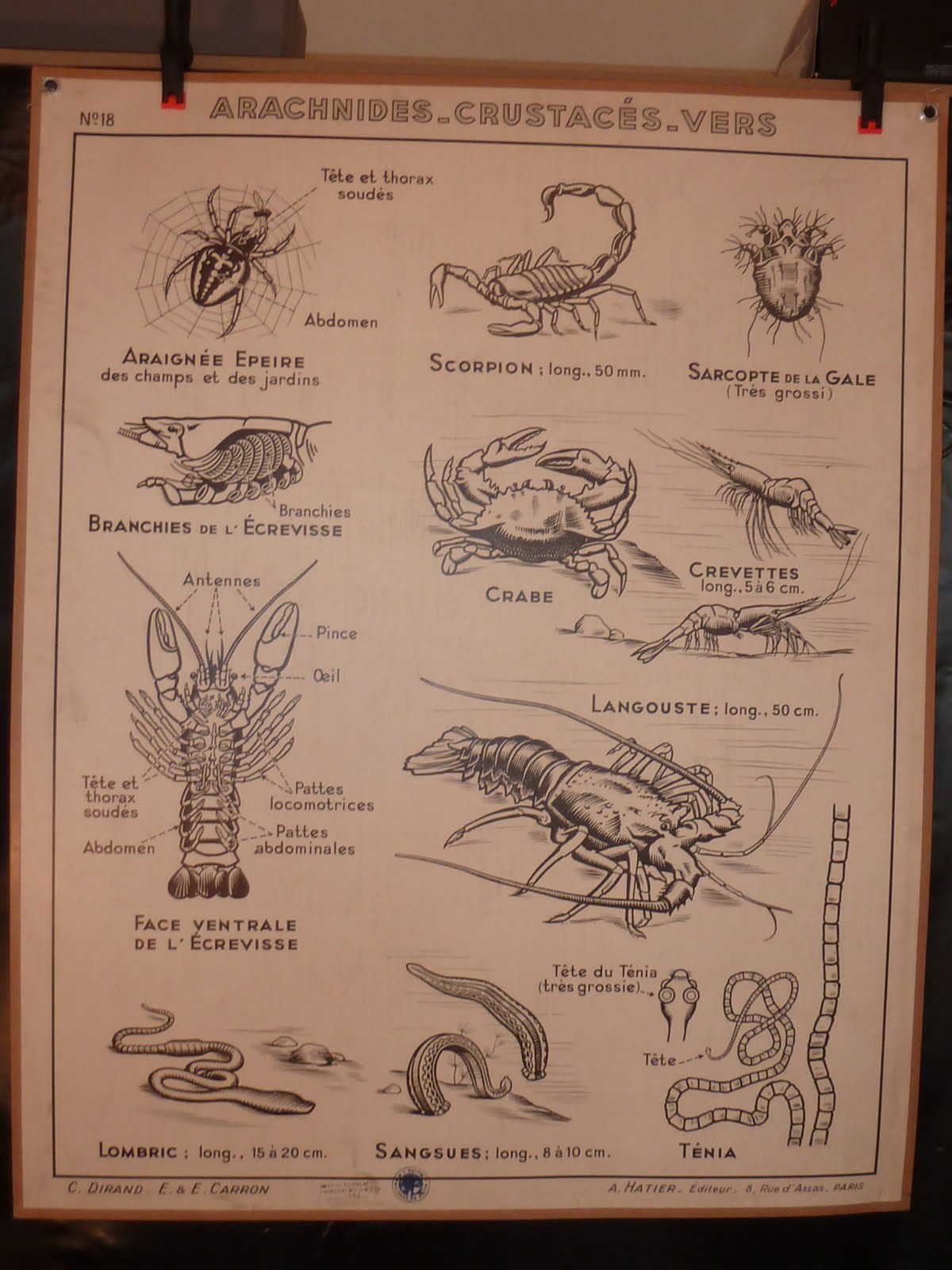 Vintage French Posters Botany Animals Anatomy, old World Maps from ...